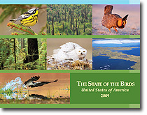 news-imageState of the Birds report cover